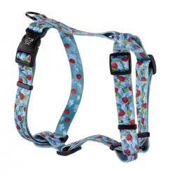 guard harness forget-me-nots mix